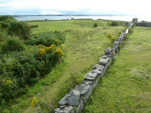 View over the garden wall on Copeland Bird Observatory. Photographer Ian McKee.