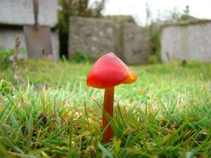 Fungi on Copeland Bird Observatory