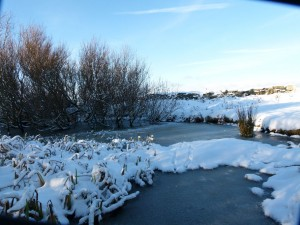The pond in the snow on Copeland Bird Observatory