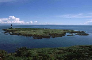 view of Mew Island from Copeland Bird Observatory